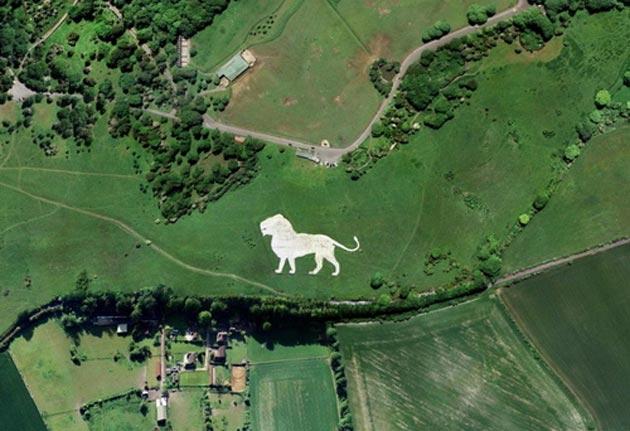 bijeli-lav