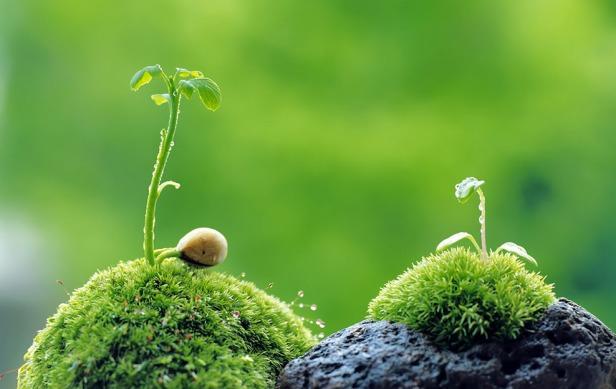 Kako-komuniciraju-biljke